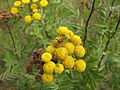 Plant 29 (6992675471).jpg