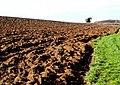 Ploughed Field, Lillington - geograph.org.uk - 1192234.jpg
