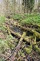 Plungar Wood - geograph.org.uk - 157169.jpg