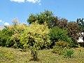 Poltava Botanical Garden (175).jpg