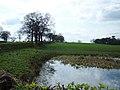 Pond near Mere Moss - geograph.org.uk - 155569.jpg