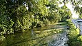 Pond to the west of Sicklinghall (9th August 2017) 002.jpg