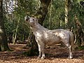 Pony browsing in Hincheslea Wood, New Forest - geograph.org.uk - 397076.jpg