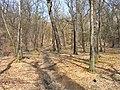 Prague Kunraticky Creek Slope2.jpg