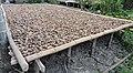 Promonant horticulture produce of Havelock, Andaman Island, India.jpg