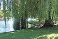 Public Garden Lagoon 12.jpg
