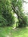 Public footpath to Cook's Lane - geograph.org.uk - 1431031.jpg
