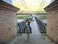 PuenteOccidenteSfeAntioquia3.jpg