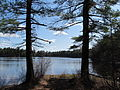 Puffer Pond, Assabet River National Wildlife Refuge, Maynard MA.jpg