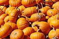 Pumpkins-6486.jpg