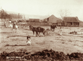 Queensland State Archives 2496 Two horse single furrow plough and farmhouse near Rosewood c 1898.png