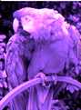 RGB Subpixel Rendering.png