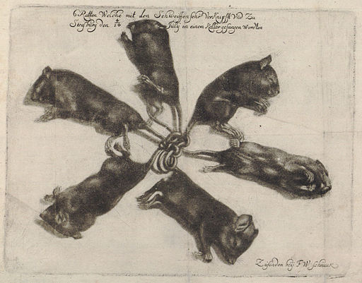 Rattenkönig c1683