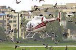 Raymond Woollen Mills Bell 206L-3 LongRanger III SDS-1.jpg