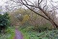 Rea's Wood, Antrim (1) - geograph.org.uk - 611718.jpg