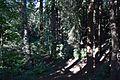 Redwood Memorial Grove 1 2017-06-12.jpg