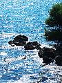 Reflections (5050633702).jpg