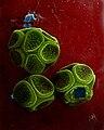 Reticularia olivacea-1.jpg