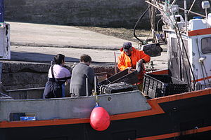 Retour de la pêche à la seiche du fileyeur Jason IV (44).JPG