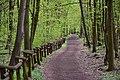 Rezerwat przyrody Las Bielański 2017f.jpg