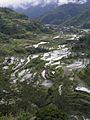 Rice Terraces in Banaue.jpg