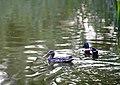 Richmond Minoru Park (7175314165).jpg