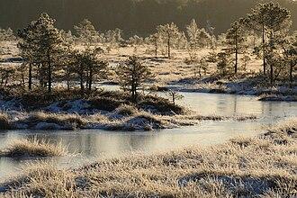 Soomaa National Park - Riisa bog.