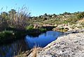 Riu Gorgos, bassa al terme de Dénia.JPG