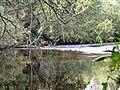 River Dane - geograph.org.uk - 508508.jpg
