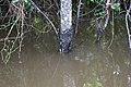 Roman Forest Flood, 4-19-16 at 2-30 PM (26436951822).jpg