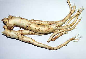 Platycodon - Image: Root of platycodon grandiflorus