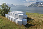 Round bales at Ullsfjorden, Lyngen, Troms, Norway, 2014 August.jpg