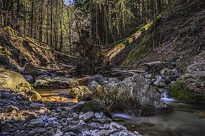Ruisseau du Vialais - March 2021 - B.jpg