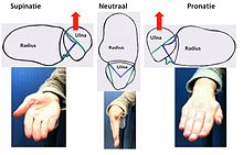 Triangular Fibrocartilage Wikipedia