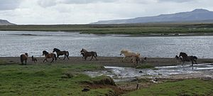 Horses (isl. Hestar) at Hestfjall (right)