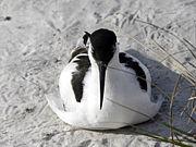 Сидящая на берегу птица