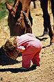 SMALL GIRL AND HORSE ON A FARM - NARA - 543784.jpg