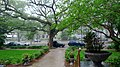 Saint Charles Avenue from Columns Porch NOLA Rain 2009.jpg