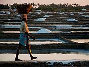 Salt field worker