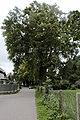 Salzburg - Salzburg-Süd - GLT Baumreihe Sperl-Eschenbach-Straße - 2019 08 12-5.jpg