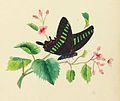 Sarah Mapps Douglass cassey-album-p-9764-p5 crop.jpg