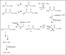 fatty acid synthesis   wikipediasaturated straight chain fatty acids edit