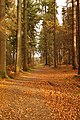 Sculpture trail, Forest of Dean - geograph.org.uk - 1053540.jpg