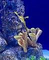 Sea Dragon (48262271787).jpg