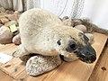 Seal hunters' settlement in Rzucewo (8).jpg