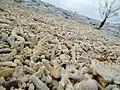 Seaside (6355667565).jpg