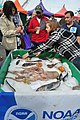 Seattle - 2018 Fishermen's Fall Festival - 22 - 'Bottom Fish of Alaska'.jpg