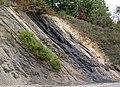 Semi-anthracite coal (Merrimac Coal, Lower Mississippian; Cloyds Mountain roadcut, Valley Coalfield, Virginia, USA) 7 (30407971481).jpg