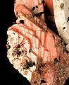 Serandite-Albite-Aegirine-242634.jpg