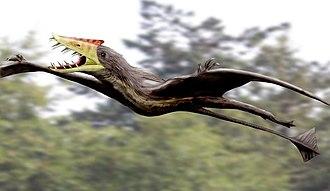 Mesozoic - Rhamphorhynchus